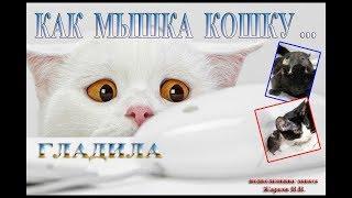 Как мышка котика гладила