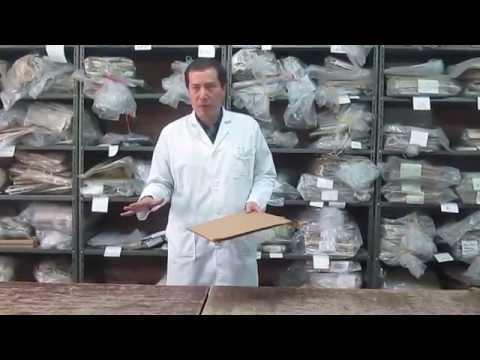Como se fabrica un herbario por  el Dr Carlos Alberto Parra Osorio. Universidad Nacional de Colombia