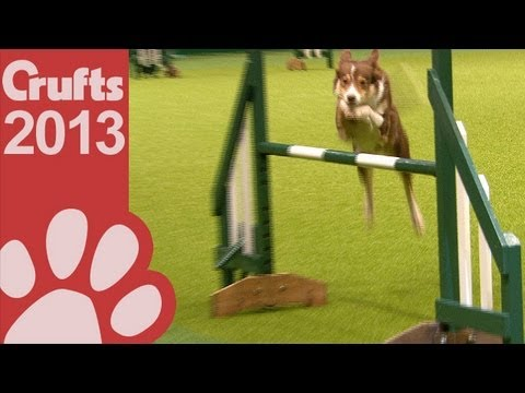 Agility - Championship - Round 1 - Crufts 2013