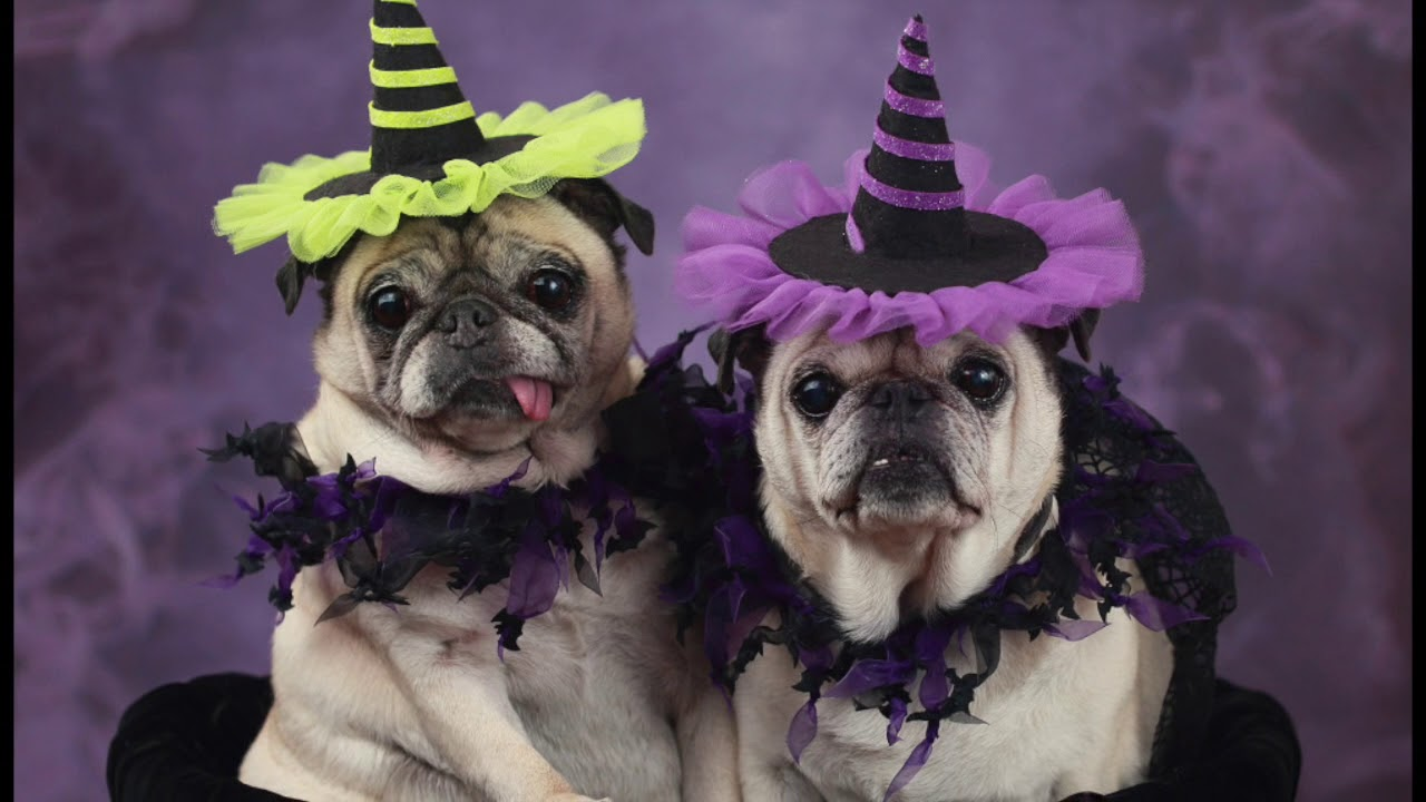 Best Pug Costumes You