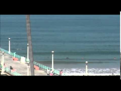 Manhattan Beach Pier Shark Attack Scene from Surfline Camera