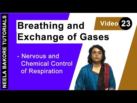Breathing and Exchange of Gases - Nervous and Chemical Control of Respiration