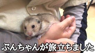 ぷんちゃんが天国へ旅立ちました。 thumbnail