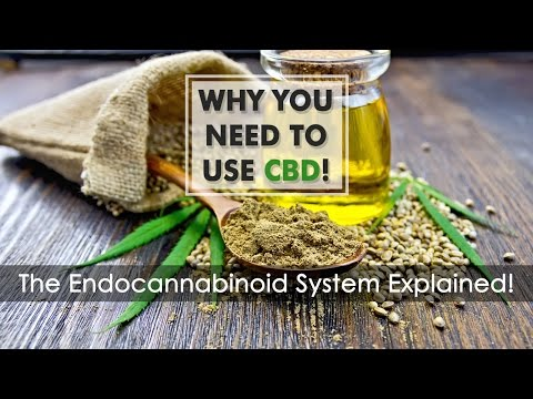 Why You Need to Use CBD - The Endocannabinoid System Explained