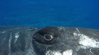 A whale saved my life   Close Encounters   BBC Earth