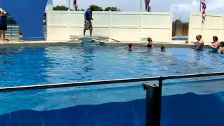 Boy Dances With Dolphin | Swim With Dolphins | Gulf World Marine Park Panama City