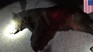 Un immense ours s'invite dans une fête étudiante en Pennsylvanie thumbnail