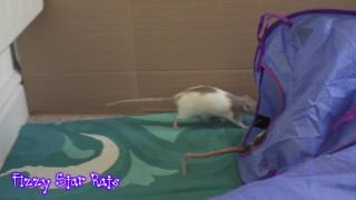 Rats Plan Their Escape! 4th Anniversary - Video 3.