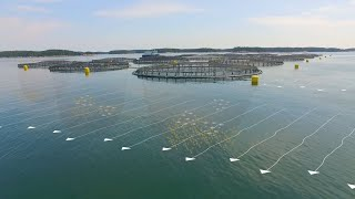 The Future of Ocean Farming: Innovations in Aquaculture