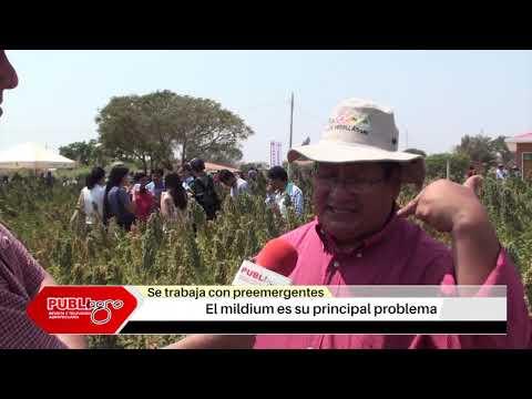 PUBLIAGRO QUINUA TROPICALIZADA MARIN CONDORI BOLIVIA