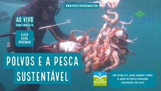 Polvos e a pesca sustentável com o Projeto Cephalopoda - VERDE MAR AO VIVO #33