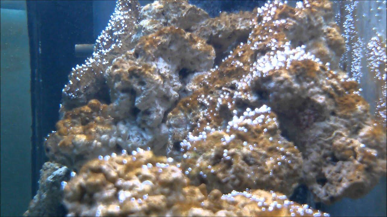 Diatoms algae aquarium