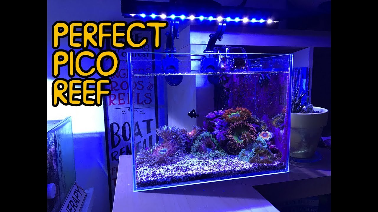 how small can you do a pico reef flower anemones in 3 gallons youtube