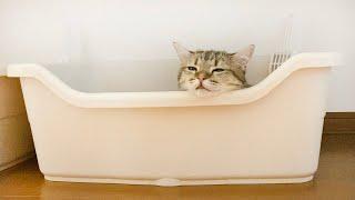 トイレをベッドだと勘違いしてしまった猫…。