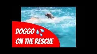 Doggo To The Rescue! 🐶😂 Dog Video