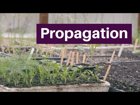 Propagation: Germinate, Grow And Plant Seedlings For A Long Season Of Bigger Harvests