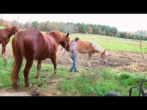 Forever Farm: Misty Brook Farm in Albion, Maine