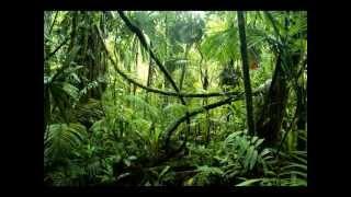 Jungle Asylum - Full Metal Junglist (Original Mix)