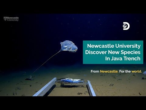 Newcastle University Discover New Species In Java Trench