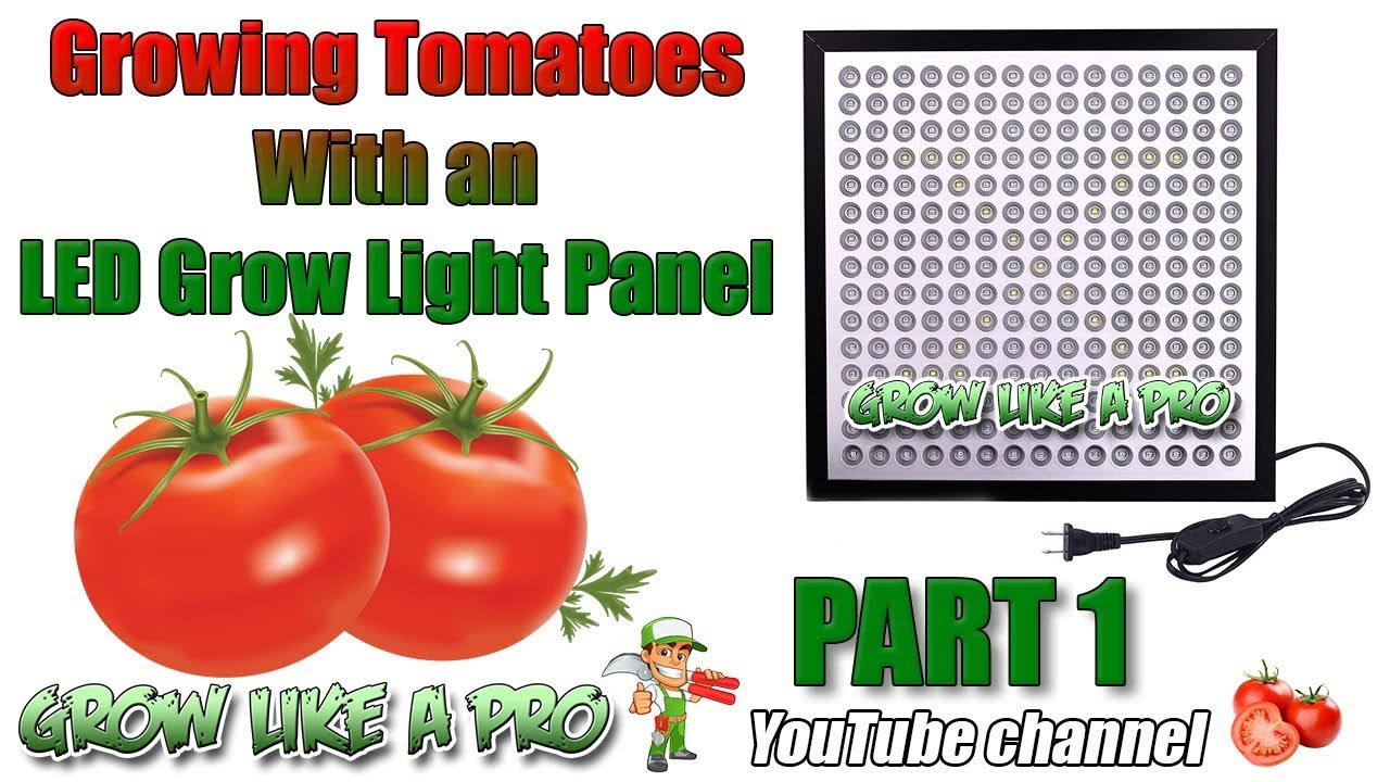Growing Tomatoes Under A 45 Watt Led Grow Light Panel 1