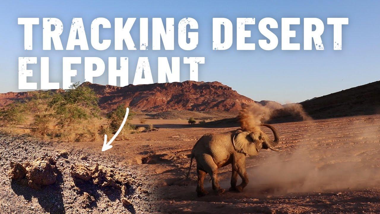 Finding Namibia's DESERT ELEPHANTS! [S5 - Eps. 56]