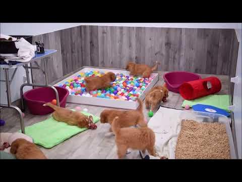 Deseree's Puppies Present: Having A Ball