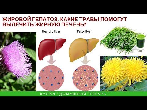 Жировой гепатоз. Какие травы помогут вылечить жирную печень? - Домашний лекарь - выпуск №275