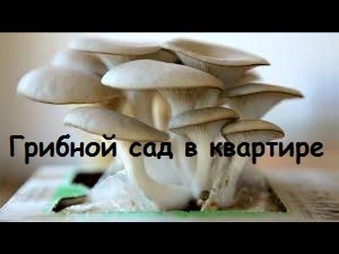 выращивание грибов в коробке