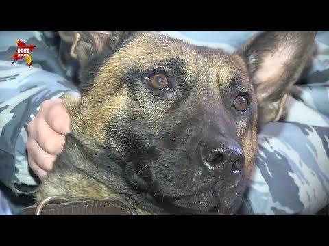 Клонированные собаки охраняют в России заключённых