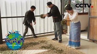 《地球村日记》 20200119 云南普洱 第三天|CCTV农业