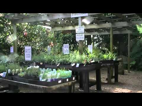 Sydney Wildflower Nursery Introduction