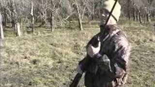 airgun pig hunting
