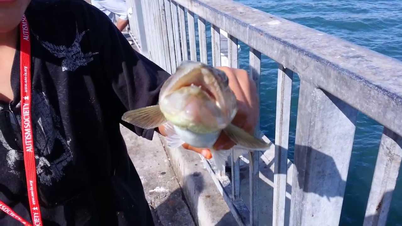 Humongous Lizard Fish Pier Fishing Long Beach