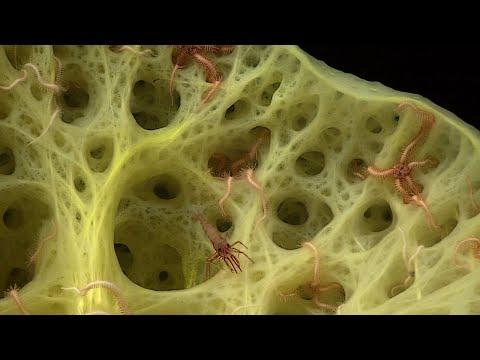 Facts: Sponges