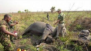Les gardes du parc national de la Garamba luttent pour la survie des éléphants en RDC