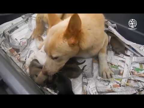 Rescued dog meat dog delivers puppies!