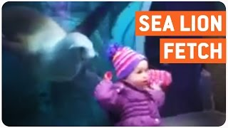 Playing Fetch with Sea Lion | Under The Sea