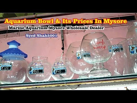 Fish Bowl 40 Rupees At Marine Aquarium Mysore