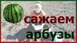 Арбузы посадка выращивание уход семена. Как посадить арбузы. Как выращивать арбузы.
