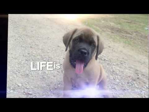 Life is Brighter with Dogs!  WZZM 13 Commercial