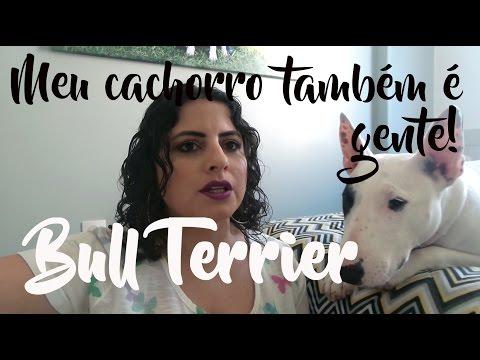TAG: Meu cachorro também é gente! Falando da raça BULL TERRIER