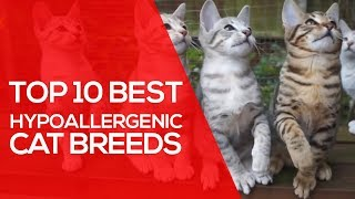 Top 10 Best Hypoallergenic Cat Breeds