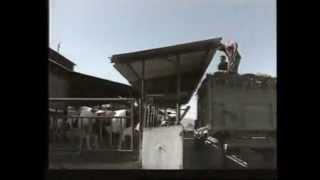 تربية الأبقار الحلوب Elevage du Bovin Laitier