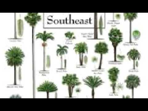 Palm Tree care, Tips , facts, deficiencies, history