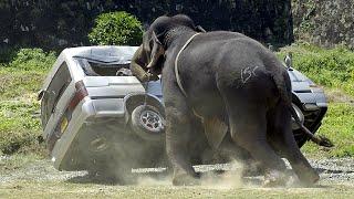 Удивительные случаи со слонами, снятые на камеру!
