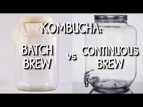 Kombucha: Batch Brew vs. Continuous Brew