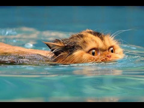 Cats scared of Water - Funny Cats vs Water compilation