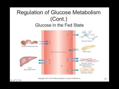 Chapter 41 Diabetes Mellitus BIOL300