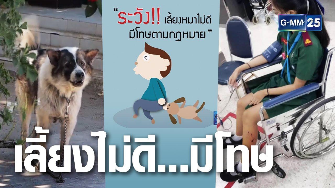 ปล่อยหมากัดคน มีโทษจำและปรับ   เจาะข่าวค่ำ   GMM25