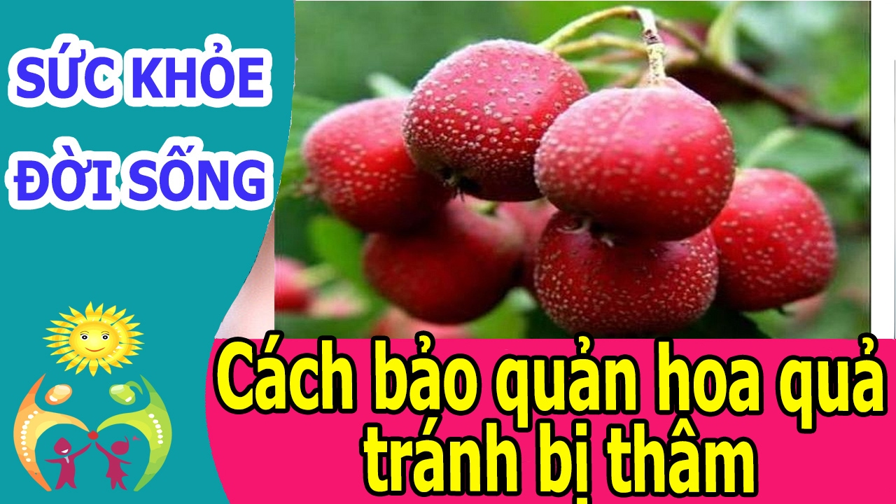 Cách bảo quản hoa quả tránh bị thâm - Mẹo bảo quản hoa quả không bị thâm